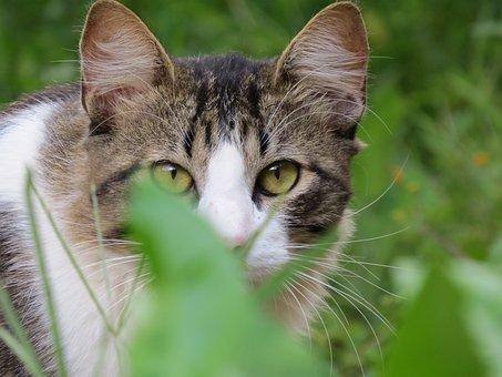 Cat, Animal, Pet, Tamed, Feline
