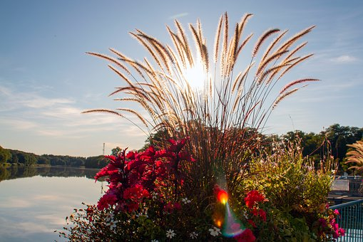 Lake, Lac De Creutzwald, Reed, Flowers, Sun, Nature