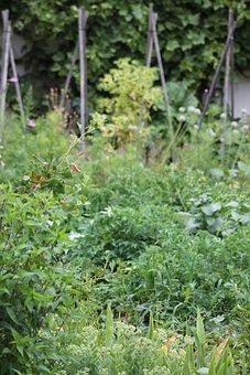 Garden, Nature, Plant, Wild Herb, Green, Weed