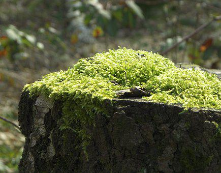 Tree Stump, Tree, Forest, Tribe, Green, Wood, Moss
