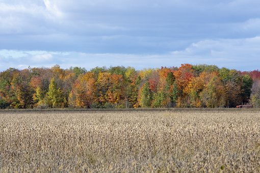 Fall, Colors, Nature, Colorful, Autumn, Tree, Landscape
