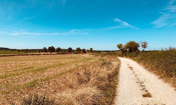 Countryside, Path, Rural, Field, Summer, Landscape