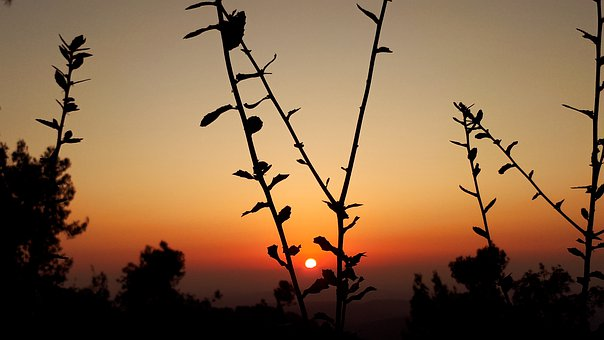 Sunset, Landscape, Sun, Lights, Plants, Horizon