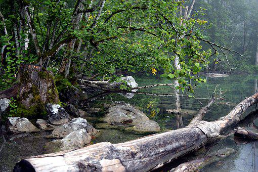Lake, Log, Stones, Trees, Landscape, Water, Wood, Green