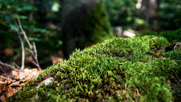 Moss, Nature, Forest, Autumn, Green, Forest Floor