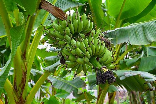 Fruit, Farm, Green, Gardening, Natural, Nutrition