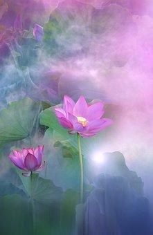 Landscape, Nature, Flower, Lotus, Lotus Flower, Exotic