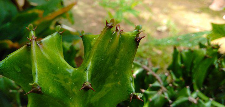 Thorn, Pain, Suffering, Nature, Sharp, Plant, Green