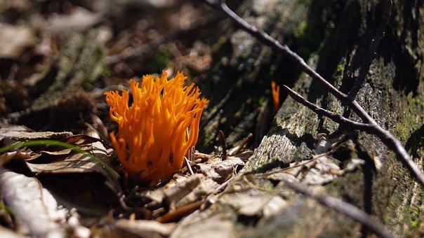 Mushroom Herb, Orange, Forest, Nature, Autumn, Mood