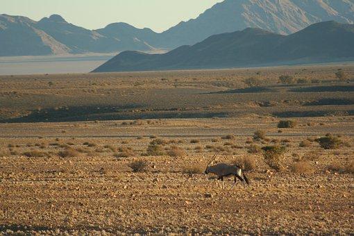 Oryx, Desert, Mountain, Namibia, Antelope, Nature