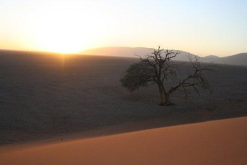 Sunrise, Tree, Desert, Landscape, Trees, Nature