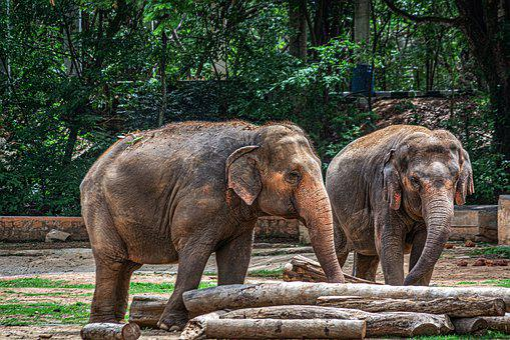 Elephants, Pachyderm, Animal, Wild, Logs, Play, Large