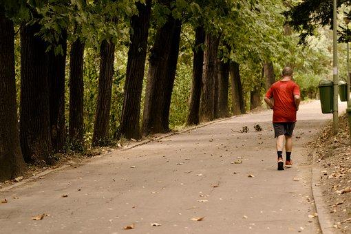 Landscape, Autumn, Nature, Trees, Magic, Alley, Man