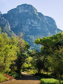 Cape Town, Eastern Slopes, Table Mountain, Forest