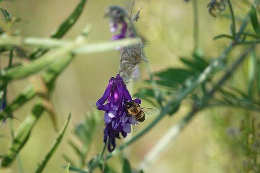 Weeds, Flower, Bee, Flora, Vegetable, Nature, Garden