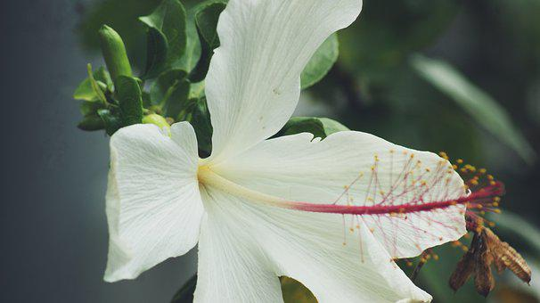 Purity, White, Flower, Flora, Love, Nature, Bloom