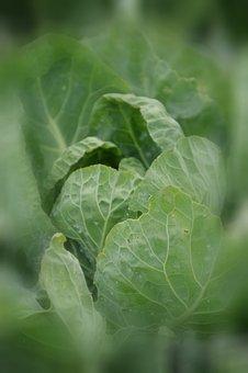 Food, Vegetables, Green, Kitchen, Power, Health