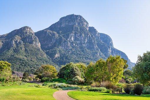 Beautiful, Blue, Cape Town, Field, Forest, Grass, Green