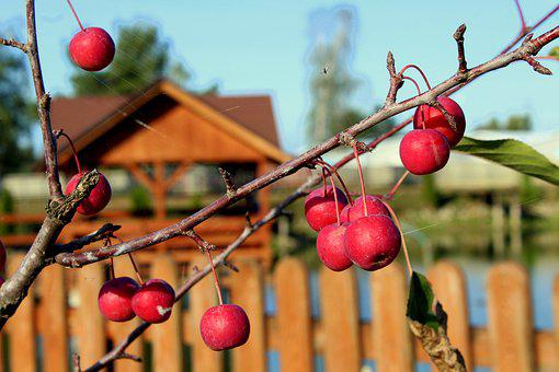 Apples, Sprig, Red Apples, Fruit, Autumn, Red, Fruiting