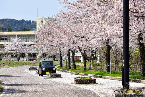 Natural, Landscape, Satoyama, School, Plant