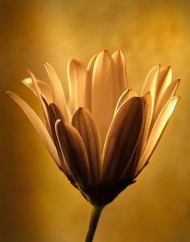 Flower, Light, Bloom, Plant, Nature, Spring, Tender