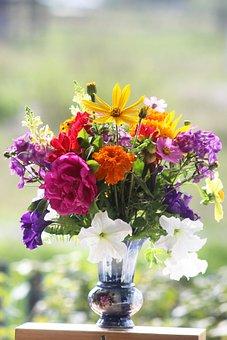 Flowers, Autumn, Nature, Beauty, Hobby, Plants, Light