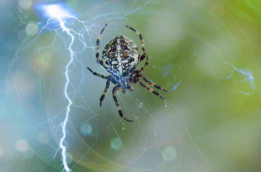Crusader Garden, Female, Spider, Storm, Lightning