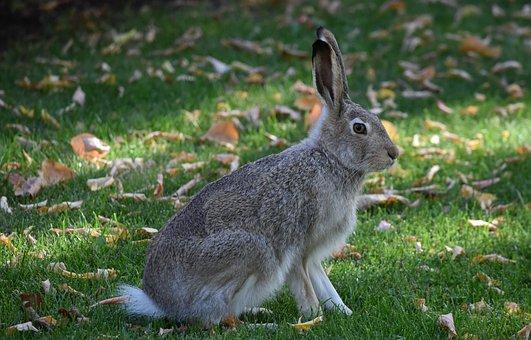 Peter Rabbit, Bunny, Rabbit, Hare, Cute, Animal, Nature