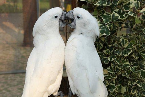 Beautiful Macaw, Macaw, Cute Parakeet, Rare Macaw