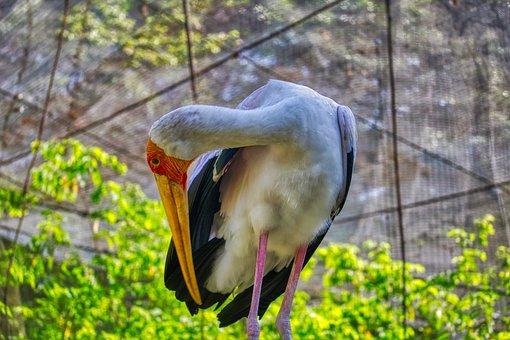 Bird, Plant, Safari, Asia, Standing, Inexperienced