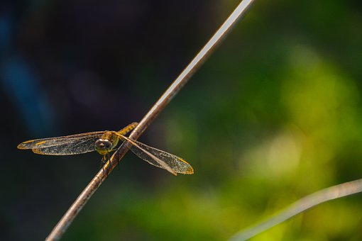 Nature, Green, Dragonfly, Insects, Wing, Summer