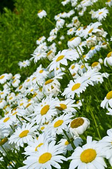 Flowers, Lawn, Summer, Flower, Spring, Nature, Garden