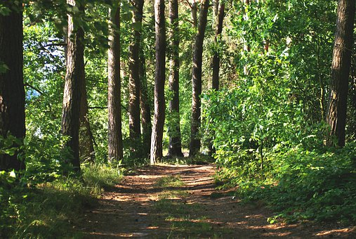 Forest, The Path, Way, Trees Green Beauty, Beautiful