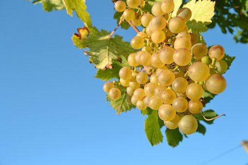 Wine, Grapevine, Sky, Fruit, The Grapes, Vitamins
