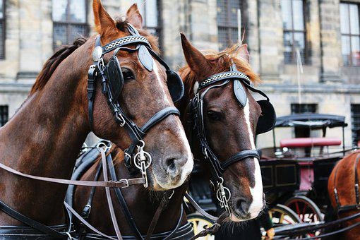 Horse, Armstardam, Culture, Animal, Animal Abusing