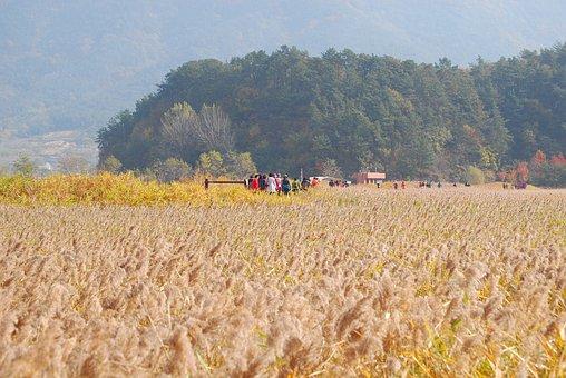 Autumn, Reed, Landscape, Nature, Sky, Scenery, Mood