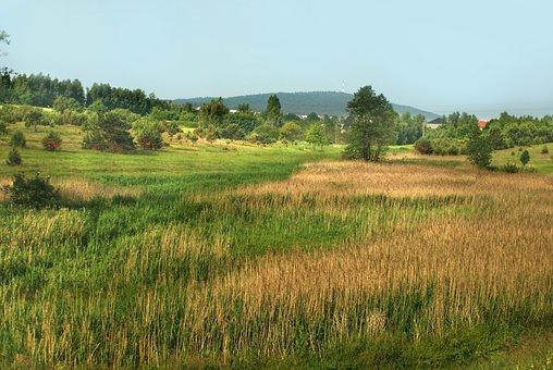 Meadow, Field, Figure, Landscape, Plant, Summer, Sky
