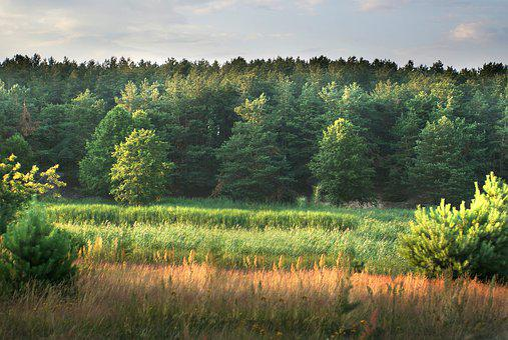 Field, Forest, Landscape, Figure, Green, Nature, Park