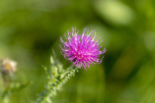 Meadow Flower, Flower, Flowers, Plant, Flora, Meadow