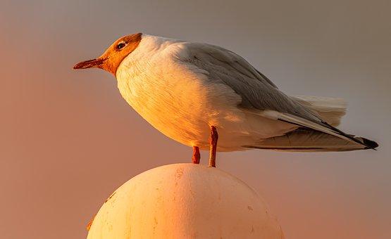 Seagull, Bird, Freedom, Wing, Nature, Sky, Water Bird