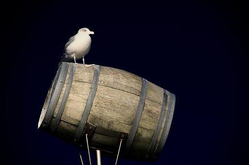 Gull, North Sea, Bird, Water Bird, Summer, Barrel