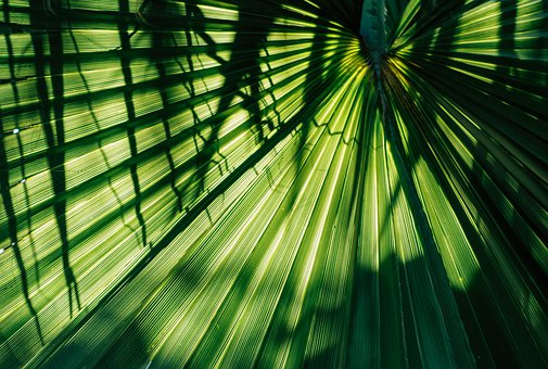 James, Green, Palm, Frond, Plant, Tropical, Background