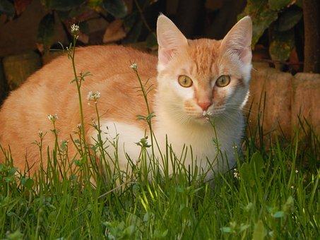 Cat, Felines, Animal, Kitten, Mammal, Pet, Cats, Nature