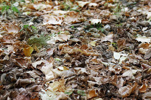 Leaves, Dry, Down, Ground, Earth, Plants, Autumn