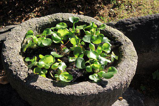 Stone Flowerpot, Water Plant, Pool, Plants, Nature