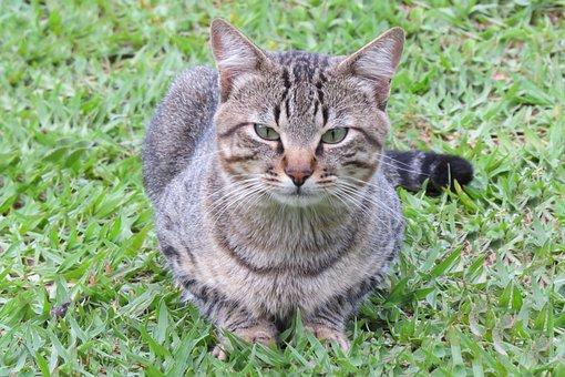 Cat, Feline, Domestic, Pet