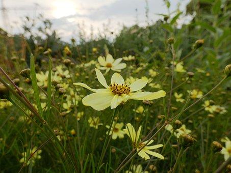 Flower, Yellow, Sun, Summer, Nature, Garden, Sunflower