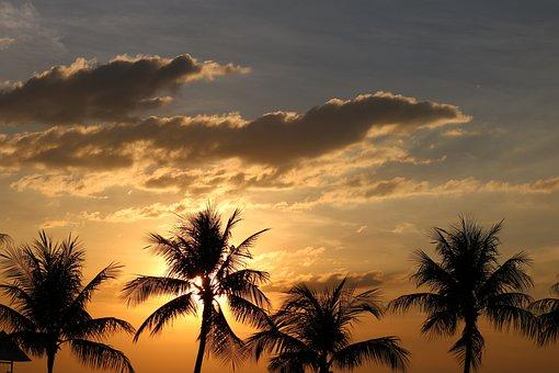 Palm Tree, Sunset, Beach, Tropical, Sky, Dusk, Paradise