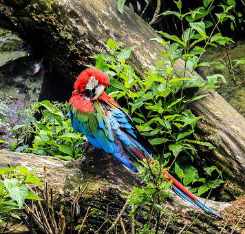 Parrot, Bird, Animal, Colorful
