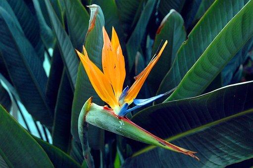 Flower, Yellow, Spring, Flora, Tulip, Sunflower, Beauty